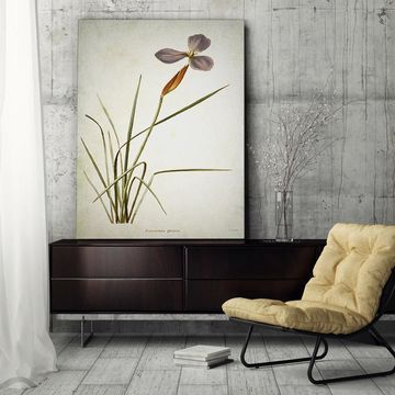 Wexford Home 'Botanical Plate XV' Gallery-wrapped Canvas Wall Art
