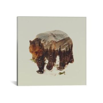 """iCanvas Bear I by Andreas Lie Wrapped Canvas Print - 26"""" x 26"""""""