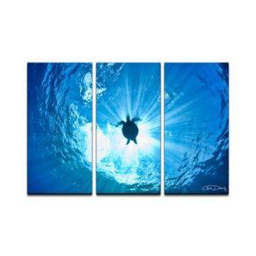 Ready2HangArt 'Sea Turtle' 3-Pc. Canvas Art Print Set