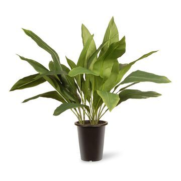 National Tree Company Artificial Aspidistra Plant