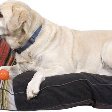 Pendleton Acadia National Park Dog Bed