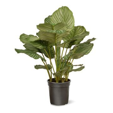 National Tree Company Artificial Calathea Plant