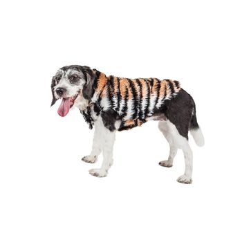 Pet Life Luxe 'Tigerbone' Glamourous Tiger Patterned Mink Fur Dog Coat Jacket