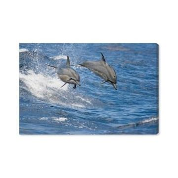Oliver Gal Spinner Dolphins Hawaii by David Fleetham Canvas Art - 10