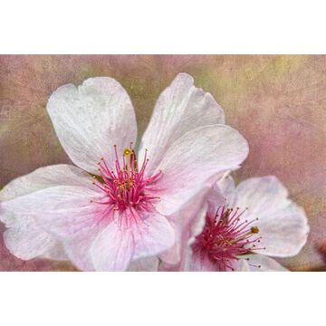 Marmont Hill - Handmade Cherry Blossoms Painting Print on Canvas