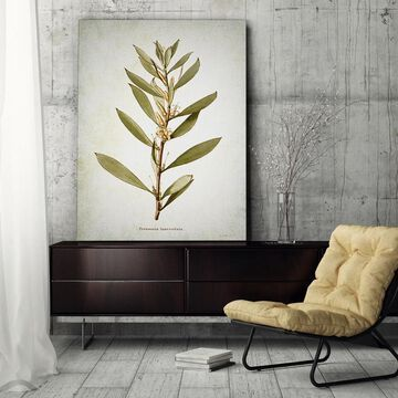 Wexford Home 'Botanical Plate XVI' Gallery Wrapped Canvas