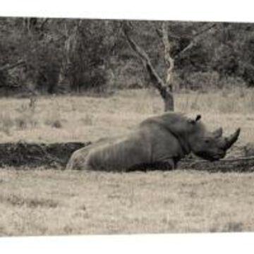 Ptm Images, Black Rhino Decorative Canvas Wall Art