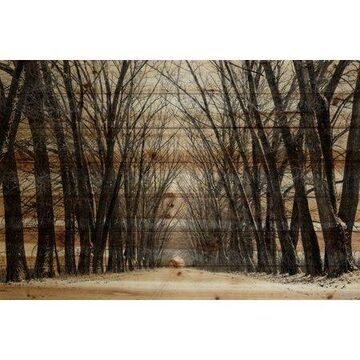 Parvez Taj Tree Path Pinewood Wall Art
