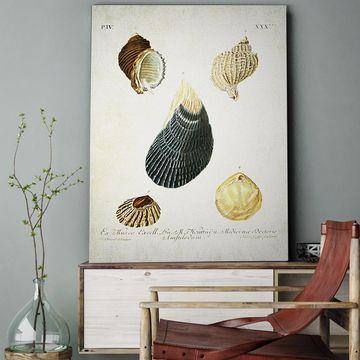 Wexford Home 'Seashell III' Wall Art