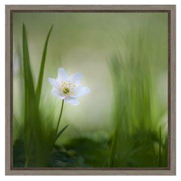 Amanti Art Framed Canvas Alone