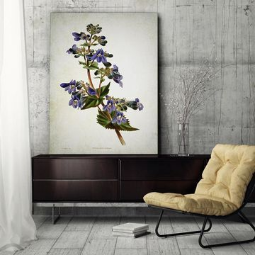 Wexford Home 'Botanical Plate XII' Gallery Wrapped Canvas