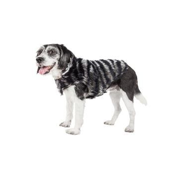 Pet Life Luxe 'Chauffurry' Beautiful Designer Zebra Patterned Mink Fur Dog Coat Jacket
