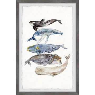 Marmont Hill Whale Species by Rachel Byler Framed Wall Art
