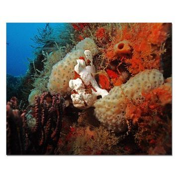 Ready2hangart Christopher Doherty Photography 'Underwater' Canvas Wall Art
