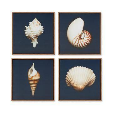 Madison Park Ocean Seashells 4-Pc. Framed Canvas Print Set