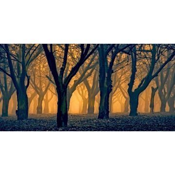 Marmont Hill - Handmade Woods Aglow Painting Print on Canvas