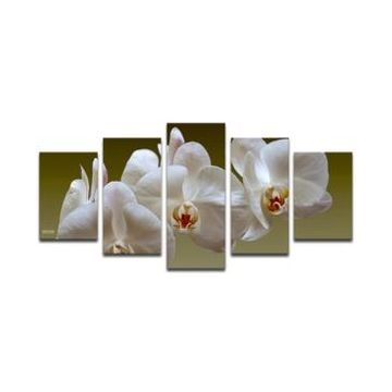 Ready2HangArt 'White Orchid' 5-Pc. Canvas Art Print Set