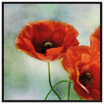 PTM Images, Artful Poppies II