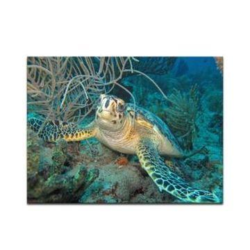 Ready2HangArt 'Turtle' Canvas Wall Art Print