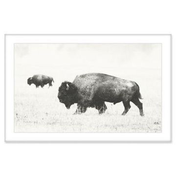 Marmont Hill Buffalo Pair 36-Inch x 24-Inch Framed Canvas Wall Art