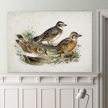 Wexford Home 'Aviary Sketch XIII' Wall Art