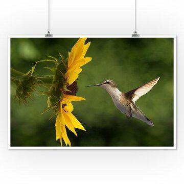 Hummingbird - Lantern Press Photography (12x18 Art Print, Wall Decor Travel Poster)