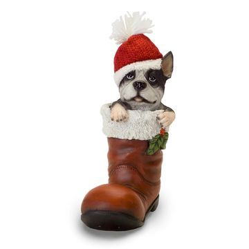 Melrose Boston Terrier in a Boot