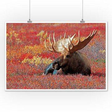 Bull Moose & Red Flowers - Lantern Press Photography (12x18 Art Print, Wall Decor Travel Poster)