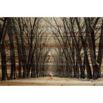 """Parvez Taj Tree Path Pinewood Wall Art, 24"""" x 36"""""""